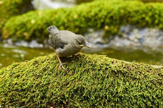 Bridge 3 fledgling