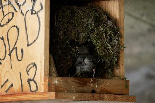 main st. dipper nest 3