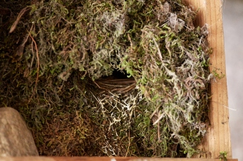 main st. dipper nest